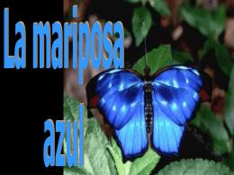 Una mariposa azul