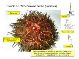 Estudio de Paracentrotus lividus (Lamarck)