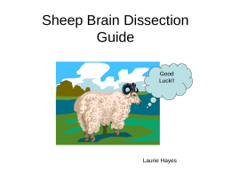 Sheep Brain Dissection Guide - cart-biomed