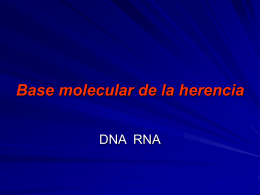 Lab. #1: Base Molecular de la Herencia