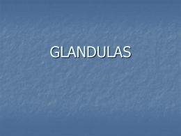 GLANDULAS - quibios