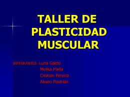 Plasticidad muscular. - Complejo Articular del Hombro