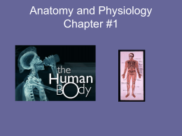 Anatomy and Physiology Chapter #1