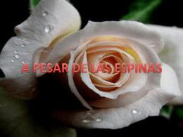 A PESAR DE LAS ESPINAS