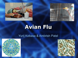 Avian Flu - rci.rutgers.Edu