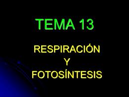 TEMA 13 - acceso25biologia