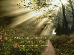 Forest walk - Amor y consciencia. Reiki Murcia