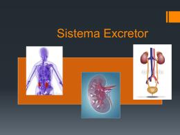 Sistema Excretor - wikiSecundaria2015