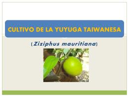 CULTIVO DE LA YUYUGA TAIWANESA