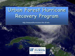 Restoring trees following a hurricane