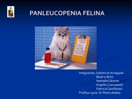 Diapositiva 1 - Panleucopenia Felina