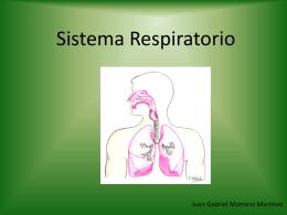 Sistema Respiratorio y corteza cerebral