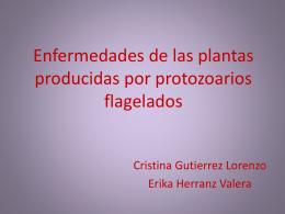 Enfermedades de las plantas producidas por protozoarios