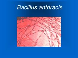 Bacillus anthracis - Maria Cristina Vasquez