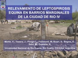 Relevamiento de Leptospirosis equina en barrios …