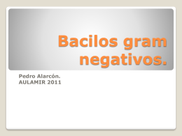 Bacilos Gram negativos - ::.. Aula-MIR