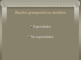 Bacilos grampositivos aerobios