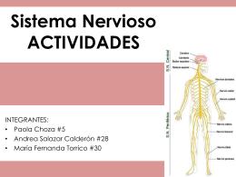Sistema Nervioso ACTIVIDADES