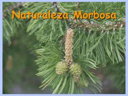 AG2- Naturaleza morbosa