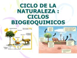 CICLO DE LA NATURALEZA : CICLOS BIOGEOQUIMIOS