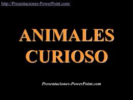 Animales Curiosos