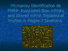 Microarray Identification de FMRP