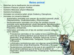 El reino animal I: presentando a los invertebrados
