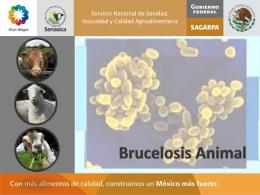 BRUCELOSIS ANIMAL - Servicio Nacional de Sanidad