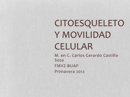 Citoesqueleto y movilidad celular
