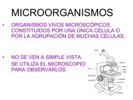 MICROORGANISMO - Belgrano