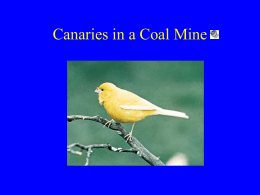 Canaries in a Coal Mine - Wayne State University