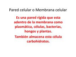 Pared celular y Membrana celular
