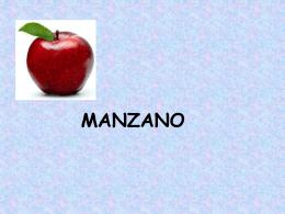 EL CULTIVO DEL MANZANO