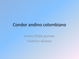 Condor andino colombiano