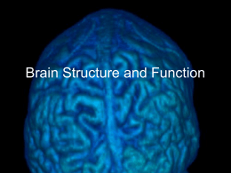 Basic Brain Structure and Function