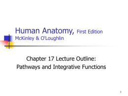 Human Anatomy, First Edition McKinley&O'Loughlin