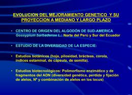 PROGRAMA DE INVESTIGACION DEL ALGODON EN LA …