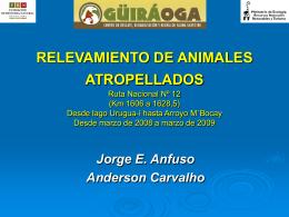 RELEVAMIENTO DE ANIMALES ATROPELLADOS Ruta …
