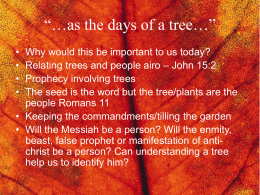 "as the days of a tree…"" - The WildBranch Ministry"