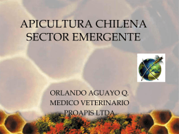 APICULTURA CHILENA SECTOR EMERGENTE