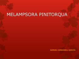 MELAMPSORA PINITORQUA