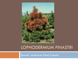 Lophodermium pinastri
