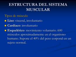 7. FISIOLOGIA DEL SISTEMA MOTOR