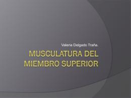 Musculatura del Miembro Superior.