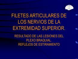 Filetes articulares de los nervios de la extremidad