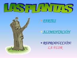 Diapositiva 1 - Colegio Veracruz