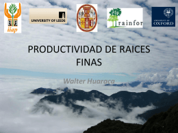 PRODCUTIVIDAD DE RAICES FINAS