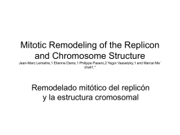Mitotic Remodeling of the Replicon and Chromosome