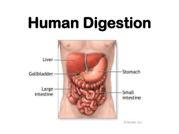 Human Digestion - I Love Science