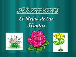 METAFITAS